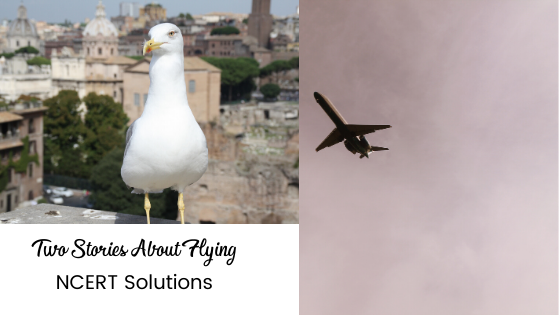 Two Stories About Flying NCERT Solutions